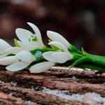 Зажим цветы Подснежники