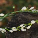 Венок Цветы Подснежники
