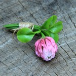 Брошь цветы Клевера