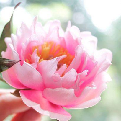 Резинка для волос цветок пион